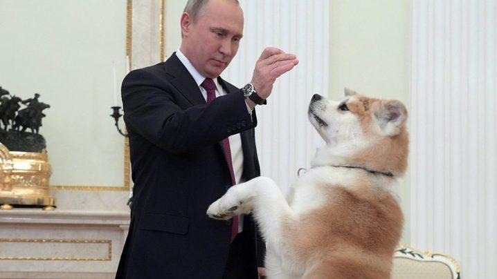 ザキトワ、金メダルのご褒美に秋田犬をリクエスト 上手く滑ればプレゼントと両親と約束