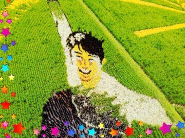 田んぼアート 観覧は10/15まで! 収穫したお米は角田市ふるさと納税の商品「田んぼアート米」として販売予定! ?