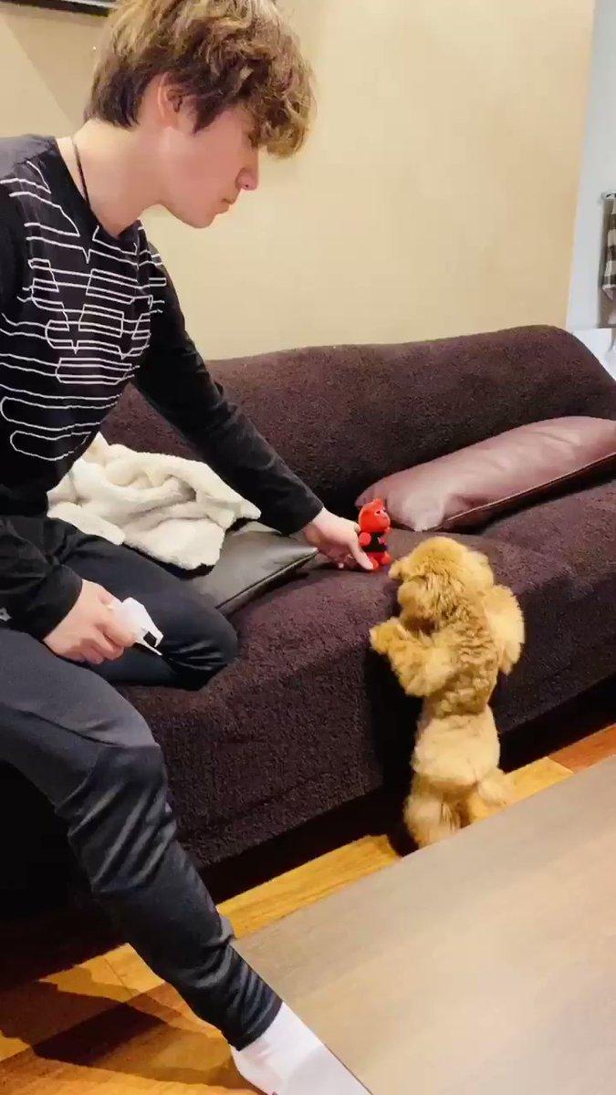 【映像有】宇野昌磨、愛犬に遊んで貰ってる?動画を公開!