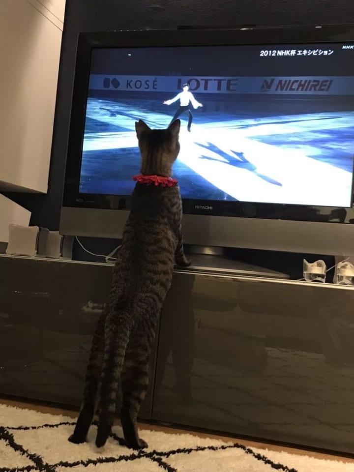 輪ちゃんは間違いなく…羽生くんのファンと思われます!  …「すげえ見てますなw」「ジブリの猫男爵みたいな」…