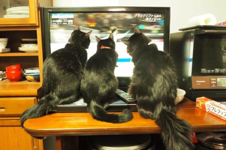 食いつきすぎ!  …「毛の長い黒猫初めて見る」「食い入るように見とる」…