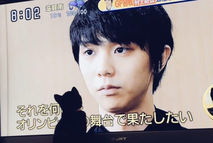 羽生と猫!  …「テレビが大きいのか猫がちっちゃいのか」「小顔の羽生よりかなり小顔のぬこだな」…