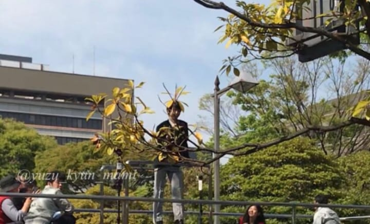 葉っぱの帽子をかぶった妖精さん!  …「妖精というかガンダムの被り物みたいw」「すごい  ドンピシャの位置w」…