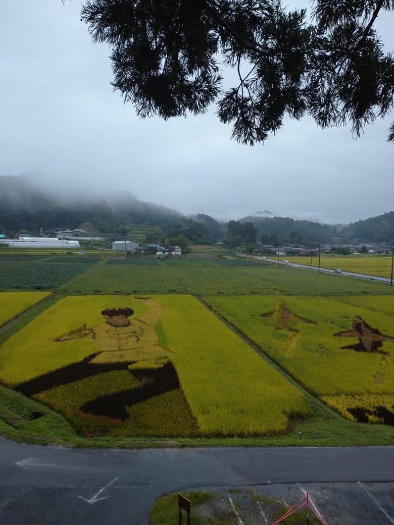 宮城県角田市西根の田んぼアート「羽生さんの衣装の部分黄金色になっていた。金メダル色。」